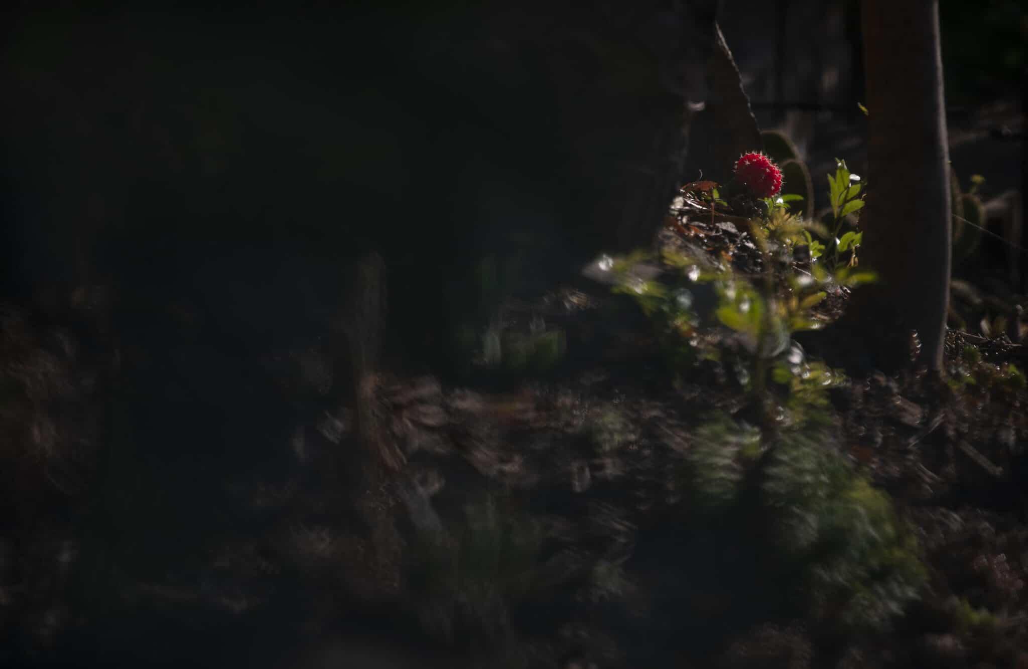Lev L Spiro – Fugitive Light