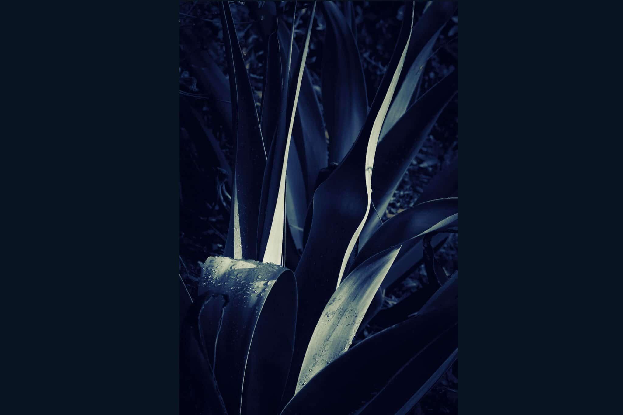 Lev L Spiro - Fugitive Light