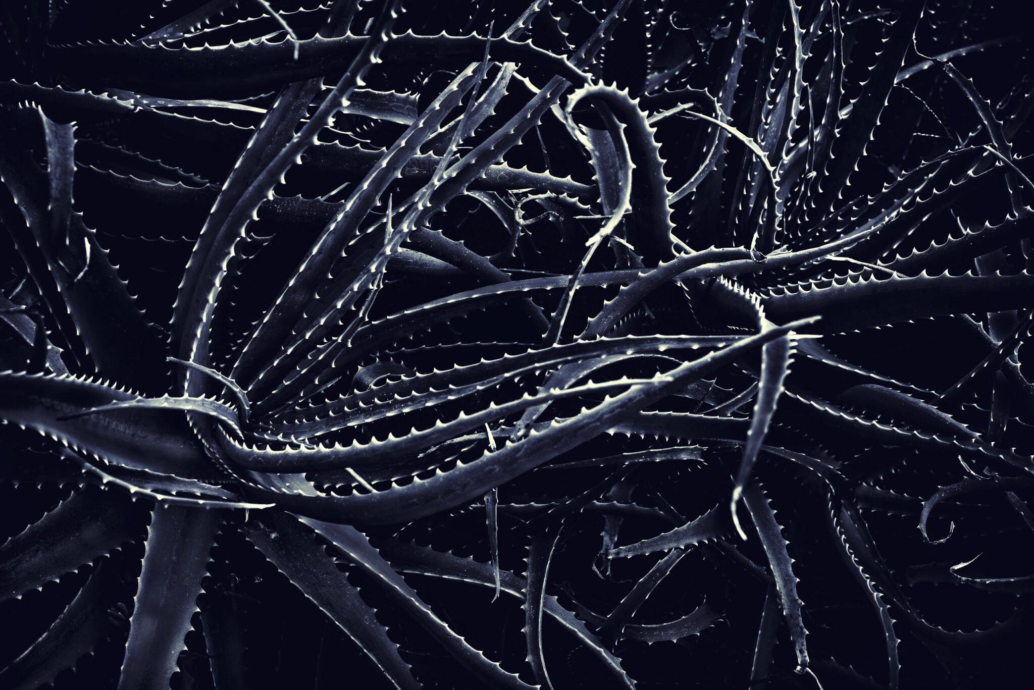 Lev L Spiro Night Creatures